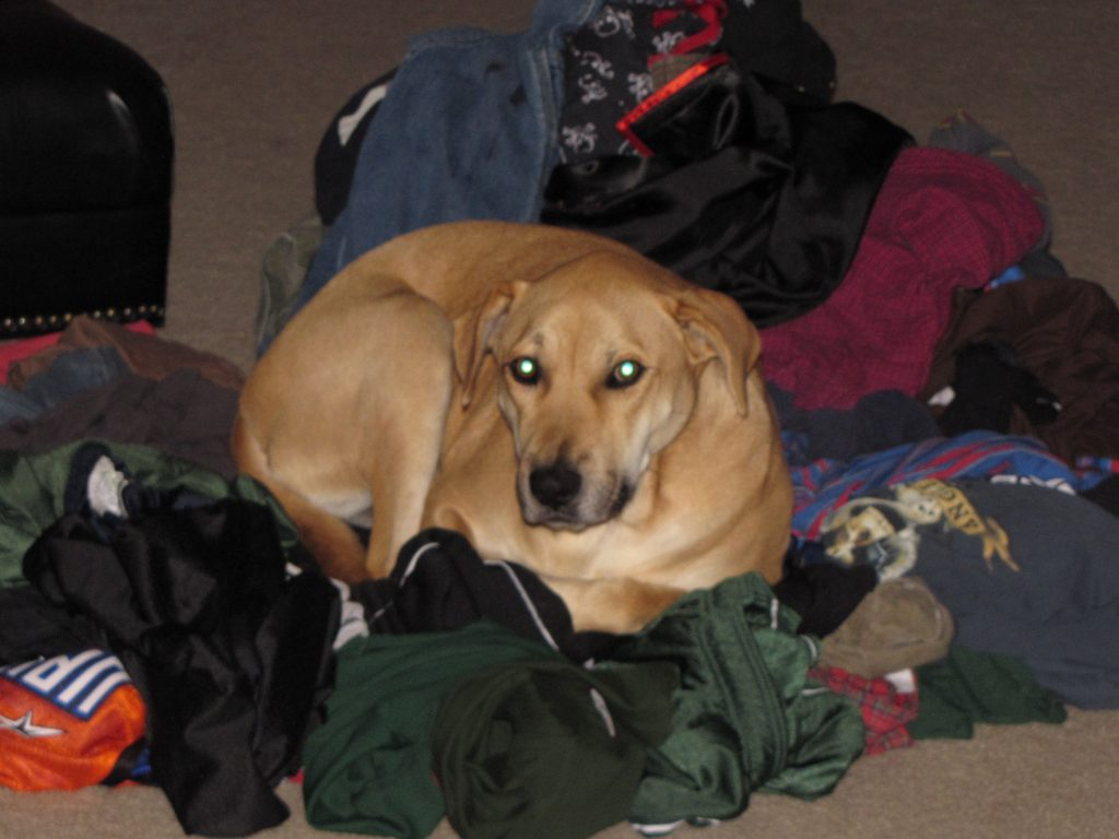 Lucy Sitting in a Pile of Clothes