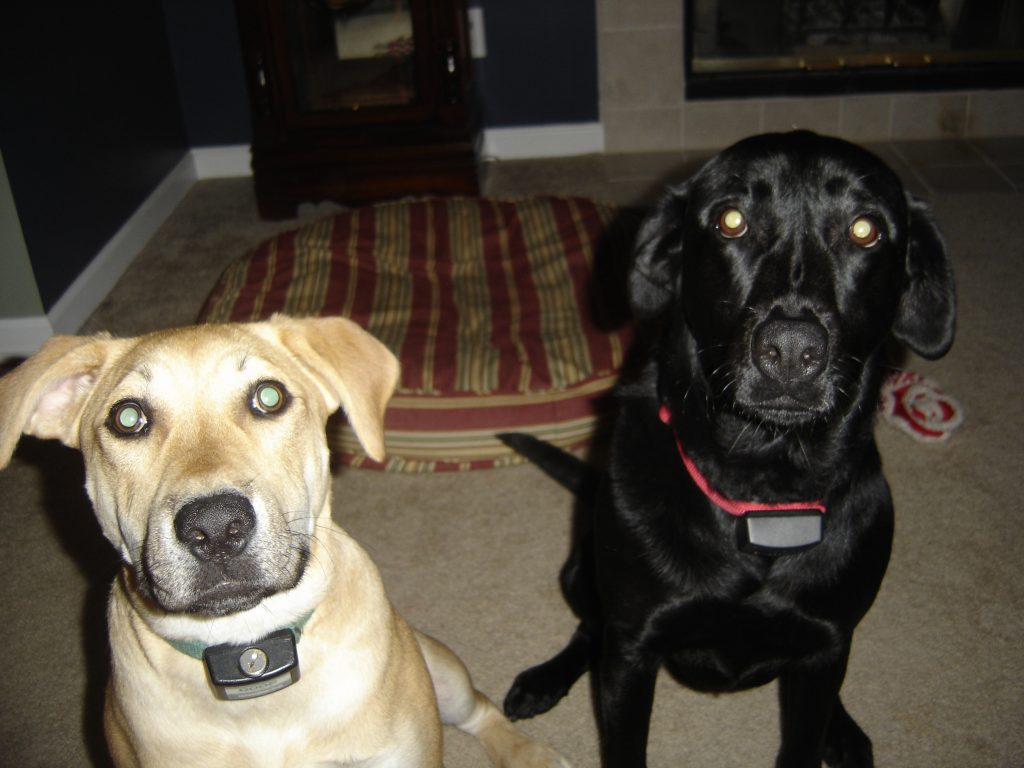 Maggie and Lucy Looking at the Camera