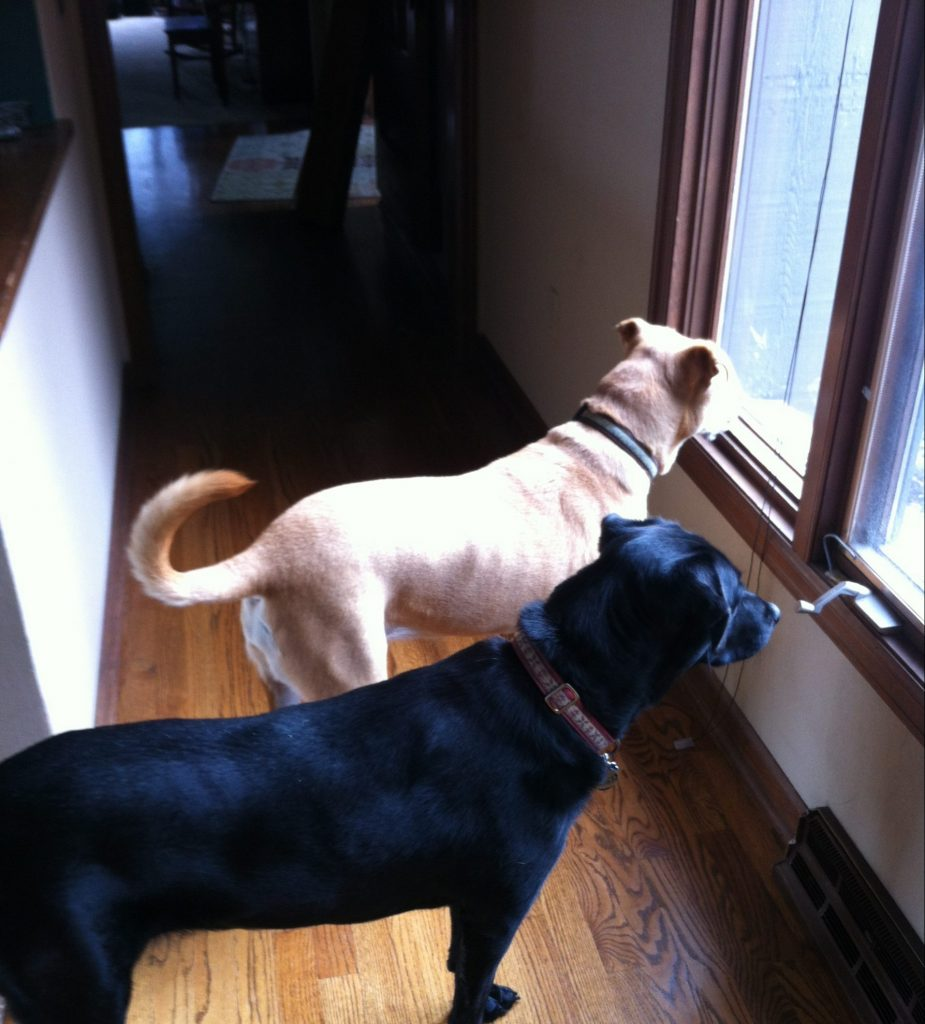 Lucy and Maggie Waiting By the Door